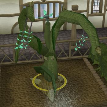 Plant Fairy Ring Runescape