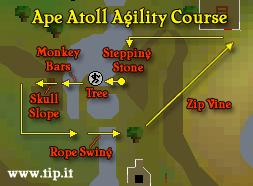 Ape Atoll Curso de Agilidade