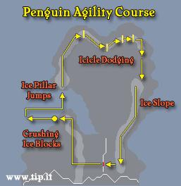 Pinguim Curso de Agilidade
