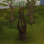 Achey Árvore